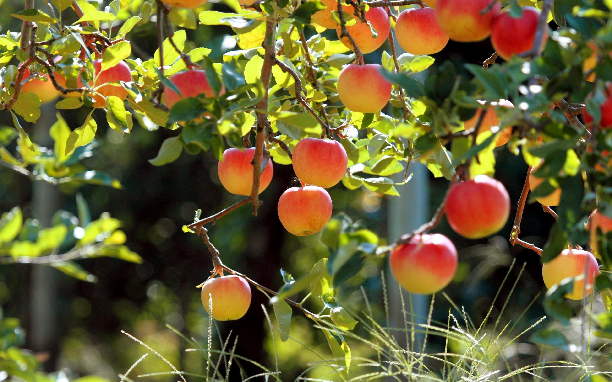 Fruits_Garden