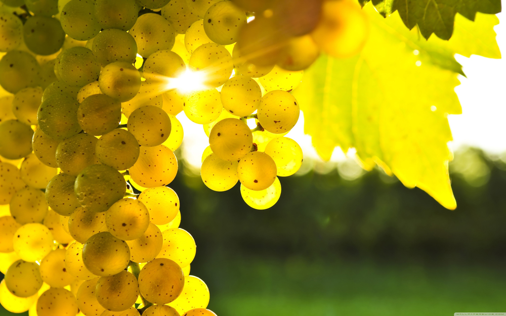 grape-wallpaper-2