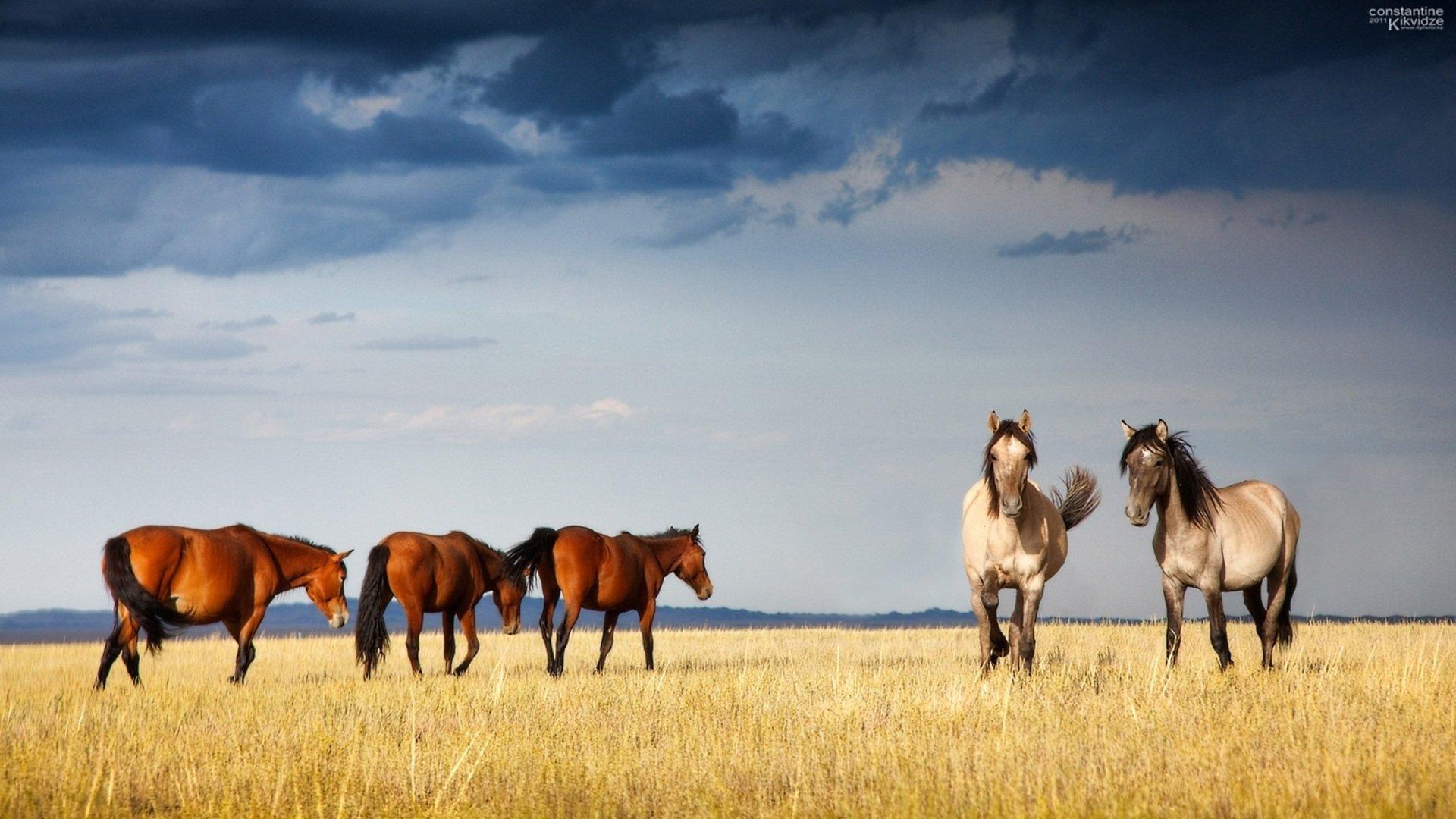 wallpaper-cartoons-animals-horses-wallpapers